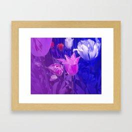 Tulip Festival Framed Art Print