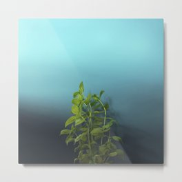 Shy and charming basil Metal Print