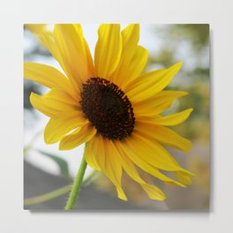 Yellow Sunflower Metal Print