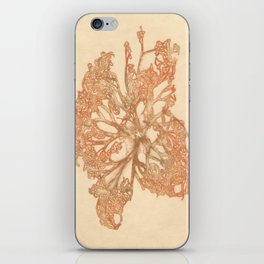 butterfly starfish iPhone Skin