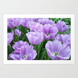 Mauve tulips Art Print