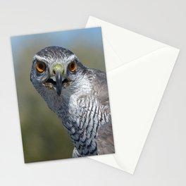 Northern Goshawk Close Stationery Cards