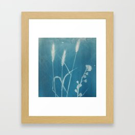 kentucky bluegrass cyanotype #1 Framed Art Print