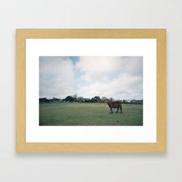 English horse roaming the prairies Framed Art Print