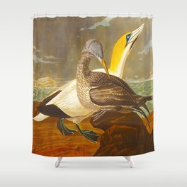 Gannet John James Audubon Scientific Illustration Birds Of America Drawings Shower Curtain