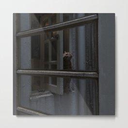 Cat at window Metal Print