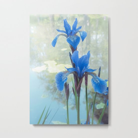 Blue Iris, The Dancing Spirit Of Early Summer Metal Print