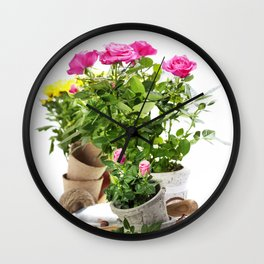 Beautiful pink and yellow roses in a flowerpots and garden tools  isolated on white Wall Clock