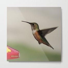 Ms. Hummingbird Checks the Feeder Metal Print