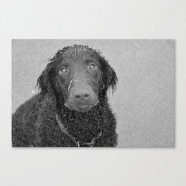 greyscale hound Canvas Print