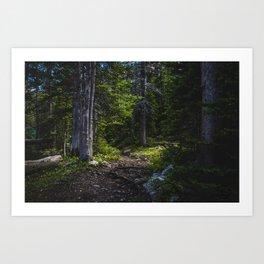 Deep Woods Near Fairy Lake, Bridger Mountains Montana Art Print