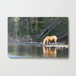 Gelding in Golden Light Metal Print