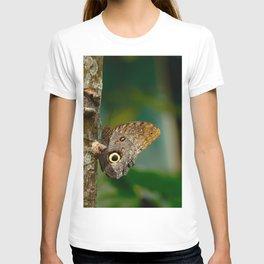 Butterfly eye of owl (Caligo eurilochus) T-shirt