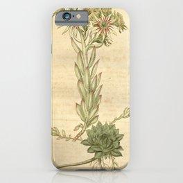 Flower 2115 sempervivum globiferum Villous Globular Houseleek10 iPhone Case