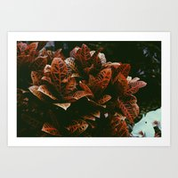 Wild Plant Art Print