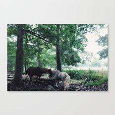 Magic Horses Canvas Print