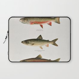 Illustrated North American Freshwater Trout Game Fish Identification Chart Laptop Sleeve