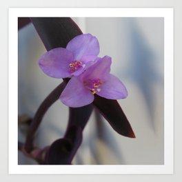 Purple Succulent Flowers Art Print