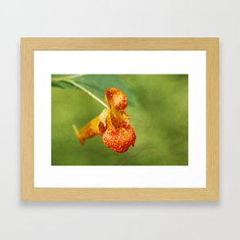 Spotted Touch Me Not Framed Art Print