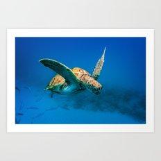 Bajan Turtle 2 Art Print