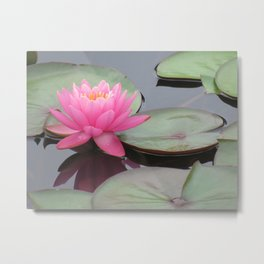Water Lily and Pads Metal Print