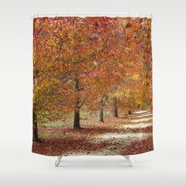 Sun Lit Tree Lined Avenue in Autumn Shower Curtain