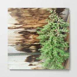Leaves Cascading Down Rustic Wood Planter Metal Print