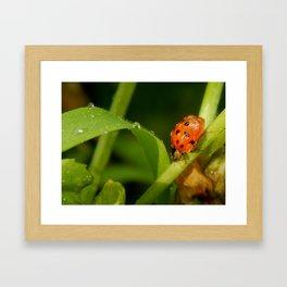 Rainy bug Framed Art Print