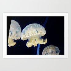 Vain Jellyfish Art Print