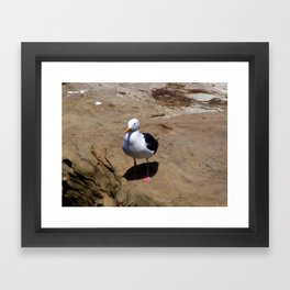 Me and My Shadow ~ Seagull at La Jolla, California Framed Art Print