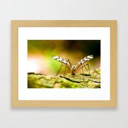 Crane Fly Framed Art Print
