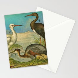 3 Waterbirds Stationery Cards