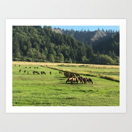 Elk Herd in Oregon Art Print