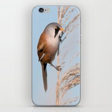 Bearded Tit iPhone Skin