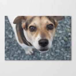 Dog at the James River Canvas Print