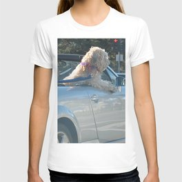 Happy dog in convertible T-shirt