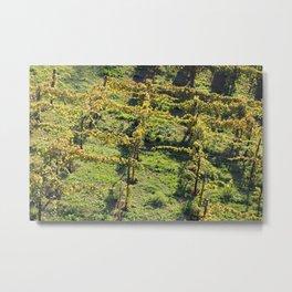 Vines Metal Print