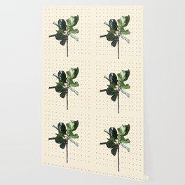 Home Ficus Wallpaper