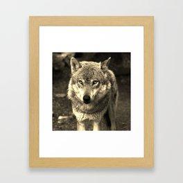 Wolf 215 Framed Art Print