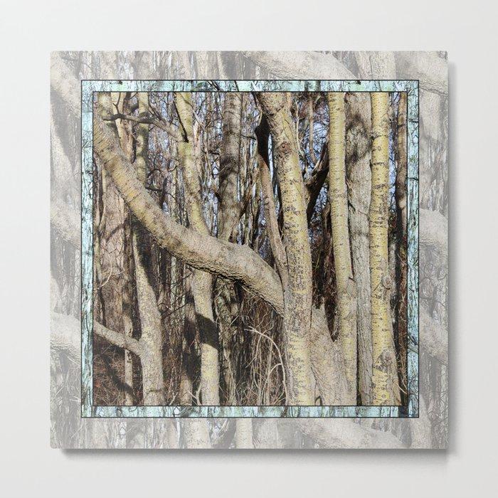 CROWDED GNARLED ASPEN TREES ON CRESCENT BEACH Metal Print