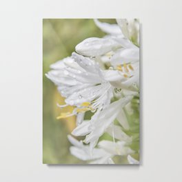 Softly White Metal Print