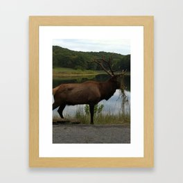 Lone Elk Framed Art Print