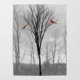 Red birds Cardinals Tree Fog A112 Poster