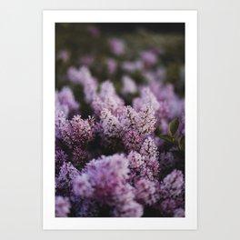 Budlings Art Print