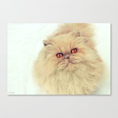 Who are you calling a big ball of fur?  Canvas Print