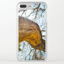 Maritime pine trunk in French Riviera in a sunny day Clear iPhone Case