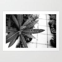 Black Oleander Art Print