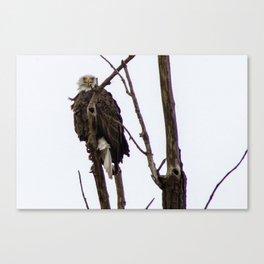 Kearney Eagle Canvas Print