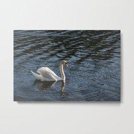 Swans in the lake Metal Print