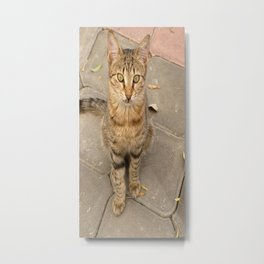 Eye Contact With A Stray Tabby Cat Metal Print